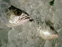 Cómo congelar pescado