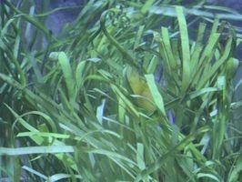 Las plantas recomendadas para un vivero de la rana