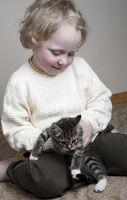 ¿Cuáles son los peligros de la manipulación de los gatos no lavarse las manos?