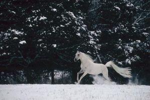Cómo cuidar los caballos en tiempo bajo cero