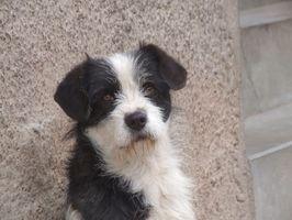 ¿Cuáles son las opciones de tratamiento para los perros que tienen cáncer de los ganglios glándulas?