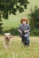Cómo impedir que las garrapatas en su perro