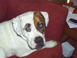 Cuáles son las causas de linfoma en los perros?