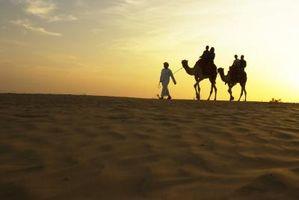 Actividades de Ecoturismo en Dubai, UAE