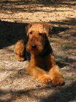 Cómo escribir un curriculum vitae para ser un miembro de la junta del club del perro