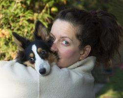 Curas naturales para las enfermedades del corazón en los perros