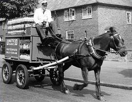Cómo entrenar a un caballo a conducir un carro