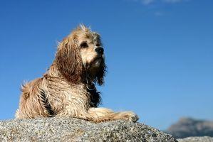 Remedios naturales para las alergias de la piel del perro