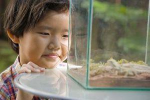 Cómo construir un terrario para ranas de árbol y Anolis