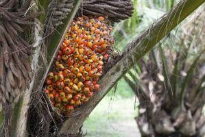 ¿Cuáles son los beneficios del aceite de palma roja?