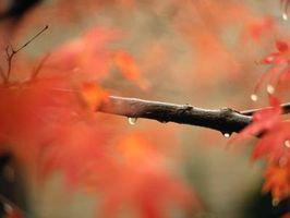 Cómo hacer Ramas goma de la goma para las Aves