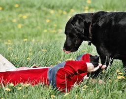 Organizaciones que proporcionan los perros de servicio para personas con movilidad reducida