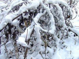 Actividades Lake Tahoe en invierno