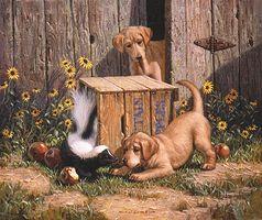 Solución rápida para un perro rociado por una mofeta
