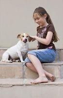 Cómo curar el eczema en los perros