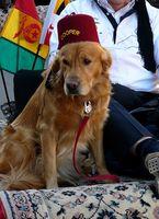 Tratamiento Los medicamentos holístico para perro con hernia discal