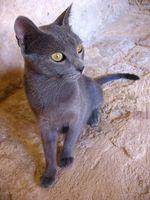 Zeniquin para infecciones del tracto urinario en los gatos